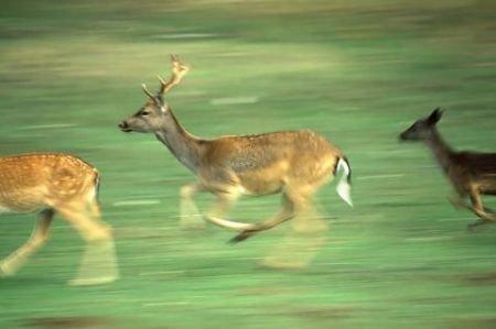 Deer Prevention