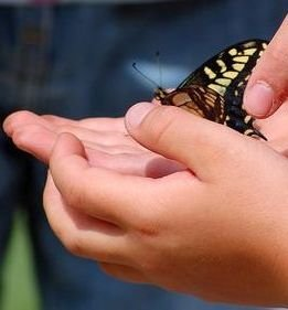 Release butterfly immediately back into nature.